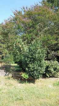 5543 Galestown Newhart Mill Rd - Photo 2