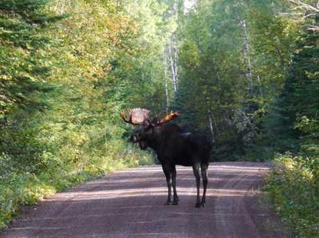 Lot 19 Two Moose Trail Wilson Lake - Photo 8
