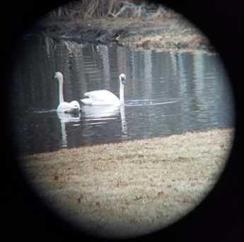 12441 Bass Lake Road - Photo 12