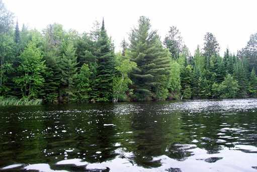 Tbd-Lot 1 Ash River Trail - Photo 1