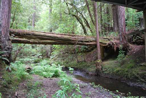 8800 Flynn Creek Road - Photo 4