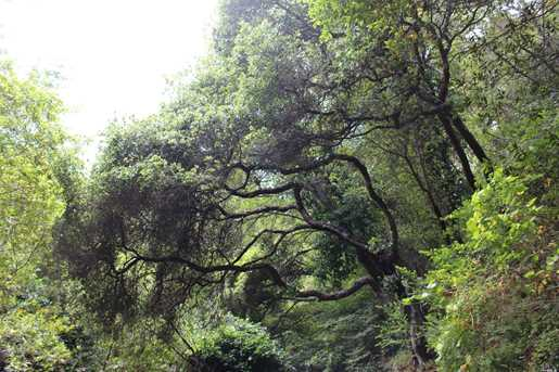 64 Madrone Park Circle - Photo 8