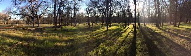 11064 Oak Mesa Drive - Photo 4