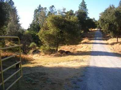 10  Acres Dream Ranch Circle - Photo 8