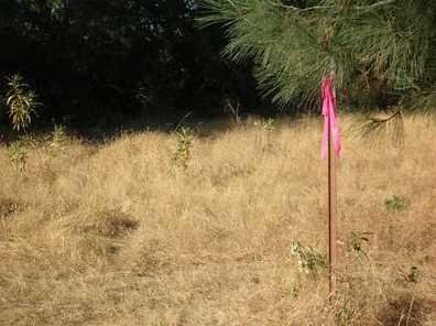 10  Acres Dream Ranch Circle - Photo 20