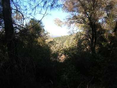 10  Acres Dream Ranch Circle - Photo 12