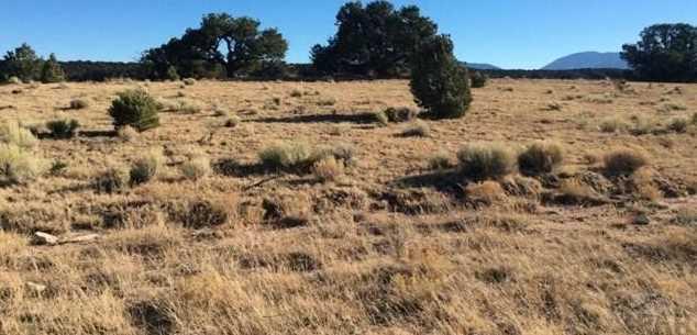48&49 Colorado Land and Grazing - Photo 18