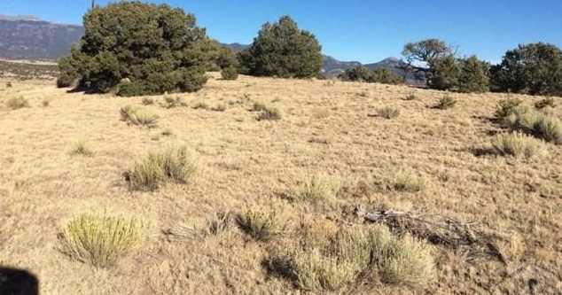 48&49 Colorado Land and Grazing - Photo 4