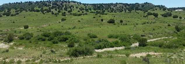 Tbd Horse Creek Rd - Photo 1