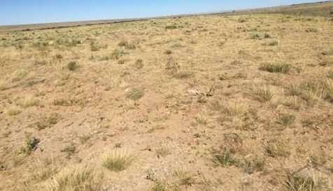 13 Eagle Flat Ranch - Photo 6