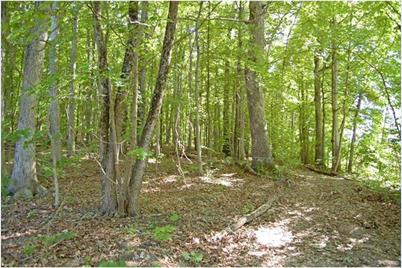 80 + Acres Off Hwy 30 - Photo 1
