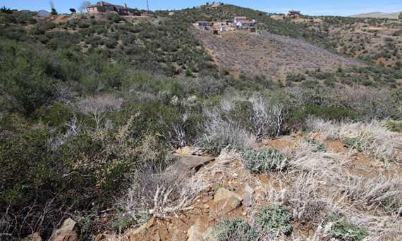 6700 Muddy Paw Trail - Photo 12
