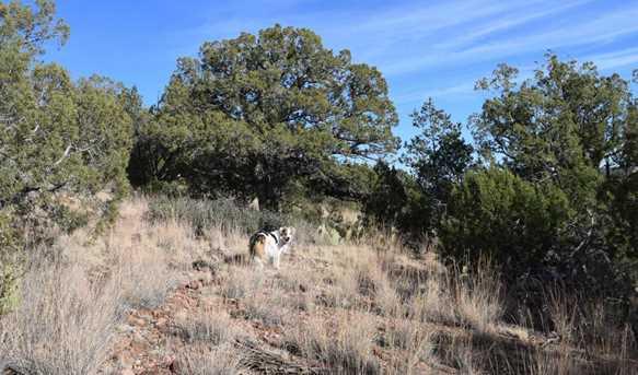 807 Sierra Verde Ranch - Photo 6