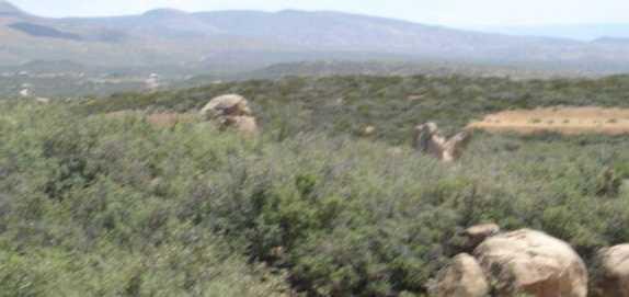 61 Sheridan View Way - Photo 4