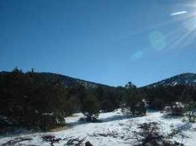 7382 Apache Avenue - Photo 2