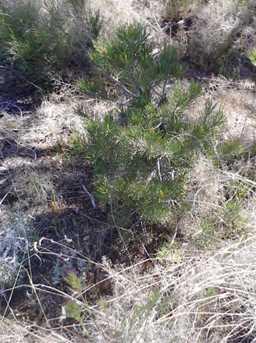 14640 Agave Meadow Way - Photo 10