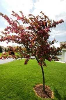 Hidden Blossom Ln #new - Photo 2