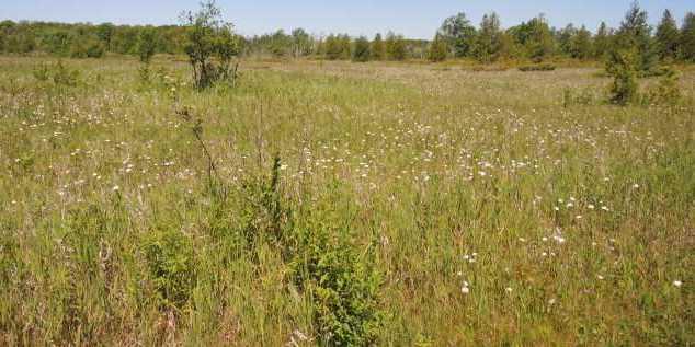 8805 W Meadow Rd - Photo 2