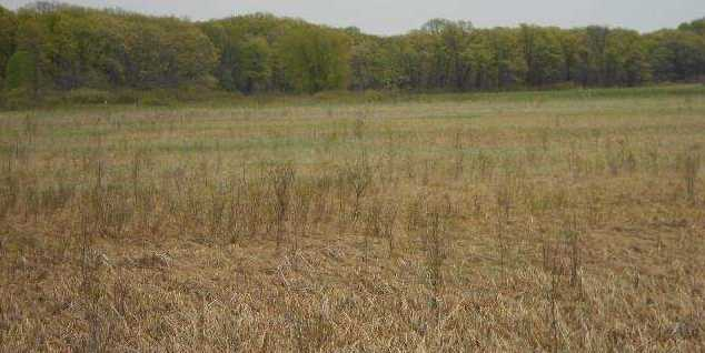122.37 Ac County Road Cm - Photo 12