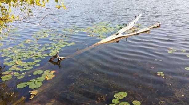 L1 Silver Lake Dr - Photo 8