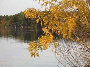 L38 Lake Edge Trail - Photo 16