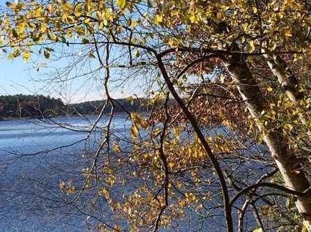 L38 Lake Edge Trail - Photo 8
