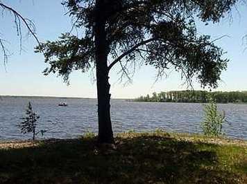 L38 Lake Edge Trail - Photo 4