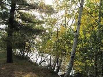 L31 E Shore Trail - Photo 14