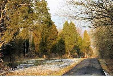 15 Pine Run Lane - Photo 1