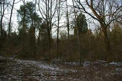 15 Pine Run Lane - Photo 10