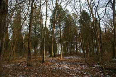 15 Pine Run Lane - Photo 6