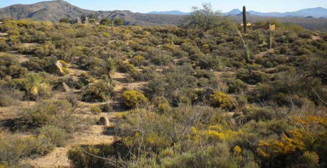 42360 N Deer Trail Road - Photo 4