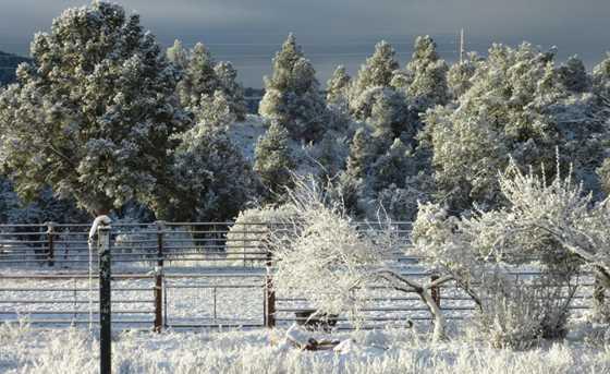 5 Spirit Pony Trail - Photo 38