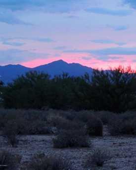 11115 Desert Whisper Way #2 - Photo 6