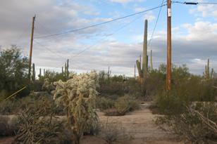 Lone Wolf Lane #E - Photo 1