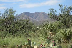 17401 Copper Collar Trail - Photo 1