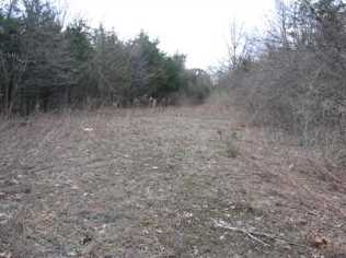 Lot 8 Upper Meadows - Photo 2