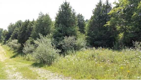 Whispering Pines Ln - Photo 2