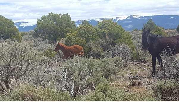 34 Wild Horse - Photo 4