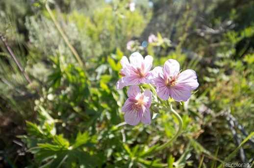 31485 Shoshone Way - Photo 8