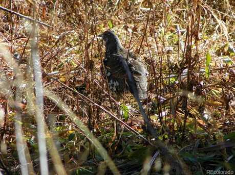 12828 Cottonwood Trail - Photo 8