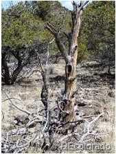 18417 Mule Deer Road - Photo 24