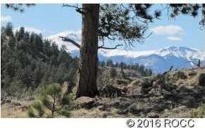 920 Pack Saddle Road - Photo 4