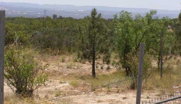 1187 Tierra Real Lane 16 - Photo 2