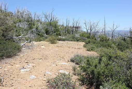 2.5 Acres N Peak Way 10 - Photo 2