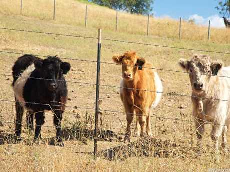 2985 Hoskings Ranch Road - Photo 24