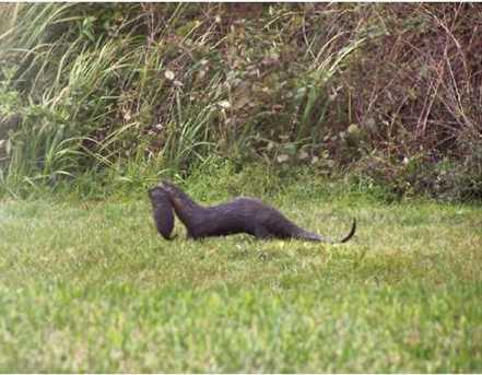 18107 Prairie Wolf Glen - Photo 8