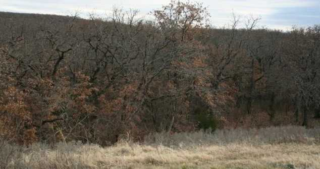 L 590  Cross Timbers - Photo 4