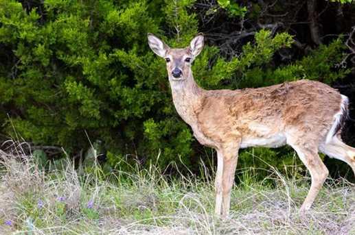 455  Torrey Pines Drive - Photo 10