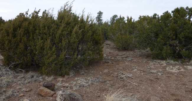 Tbd Lot 237 Show Low Pines - Photo 4